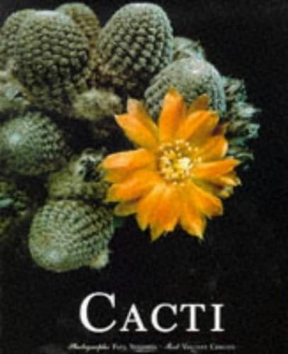 Cacti By Vincent Cerutti