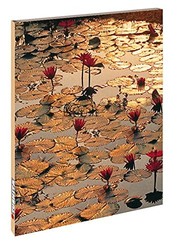 Lotus Pond By Tushita