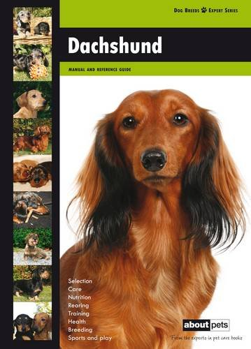 Daschund By About Pets