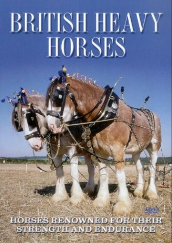 British Heavy Horses - Horses Renowned For Their Strength And Endurance