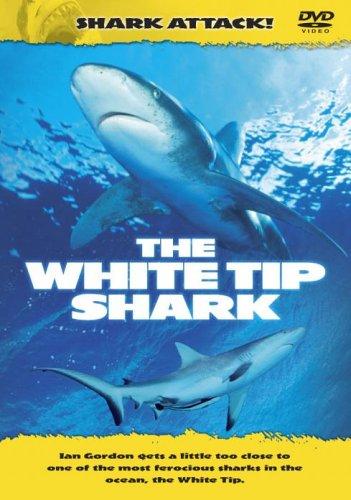 Shark Attack - Shark Attack - The White Tip Shark