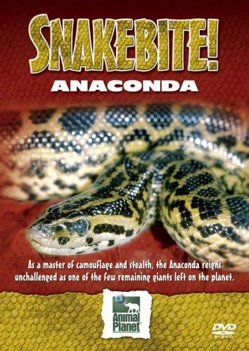 Snake Bite - Anaconda