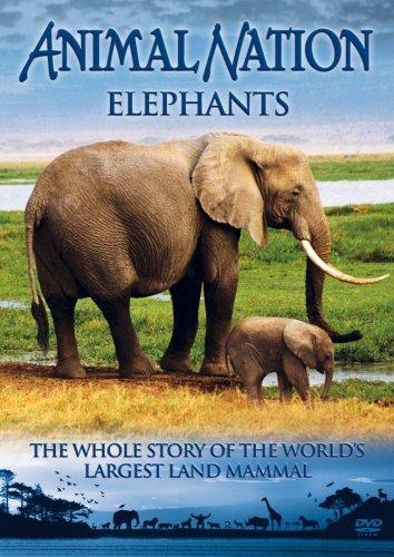 Animal Nation - Animal Nation - Elephants