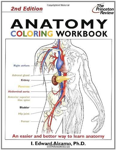 Anatomy Coloring Workbook: Bk. 2 by I. Edward Alcamo