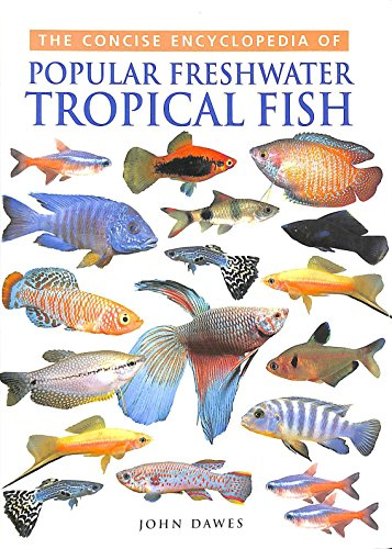 Tropical Fish by John Dawes
