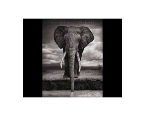 A Shadow Falls by Nick Brandt