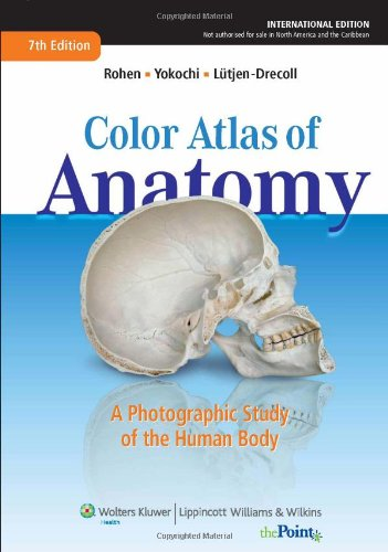 Color Atlas of Anatomy: A Photographic Study of the Human Body by Johannes W. Rohen